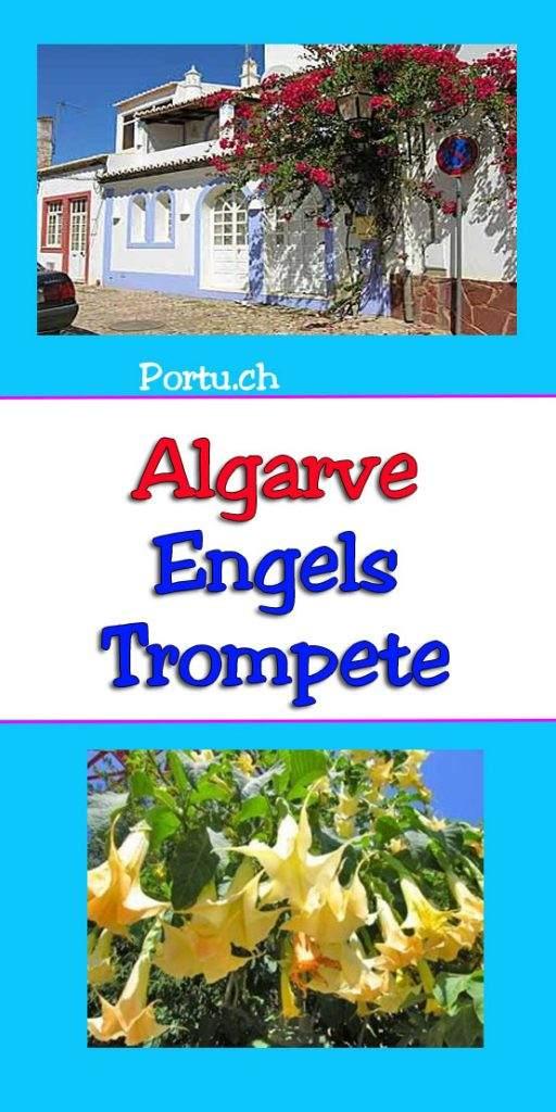 algarve-Engelstrompete
