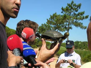 tartaruga da Florida