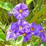 Garten und Pflanzentipps für Gewächse der Algarve.