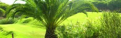 algarve-golfplaetze