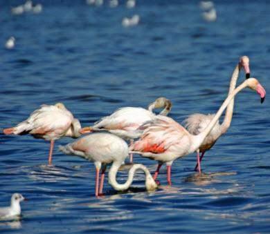 Lagoa dos Salgados flamingo