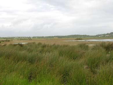 Vogelbeobachtung Algarve