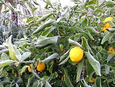 zirtone-frost-algarve