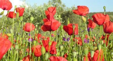 algarve flores