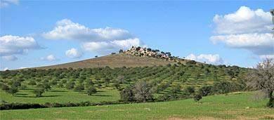 huegel-oliven-alentejo