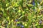 Guardar Azeite Olivenöl - Algarve