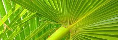 palmen blatt algarve