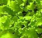 marz-der-algarve-pflanzeit-im-gemusebeet