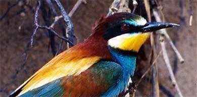 """Vogelbeobachtung als """"neue"""" Tourismusattraktion der Algarve"""