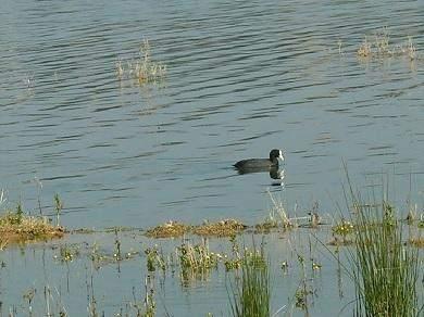 Aktion gegen illegalen Vogelfang an der Algarve