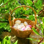 Ostern Algarve Mandeln