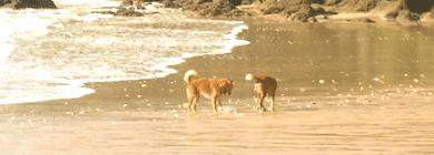 hunde urlaub algarve portugal