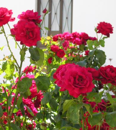 rosen portugal
