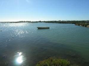 Seegurken Algarve
