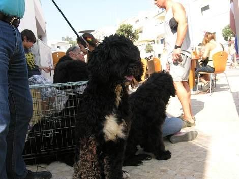 Wasserhunde  - Algarve