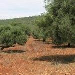 Feuerresistente Pflanzen für die Algarve