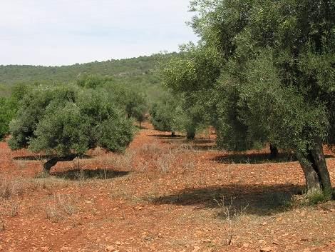 Feuerresistente Pflanzen für den Algarve