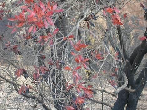 Feuerresistente Pflanzen fuer den Algarve