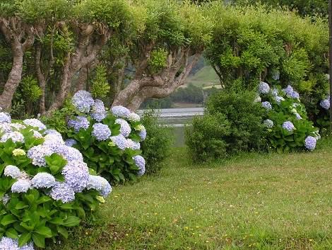 Algarve Garten