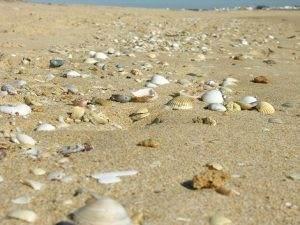 Meer Strand