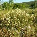 Invasive Pflanzen Monchique