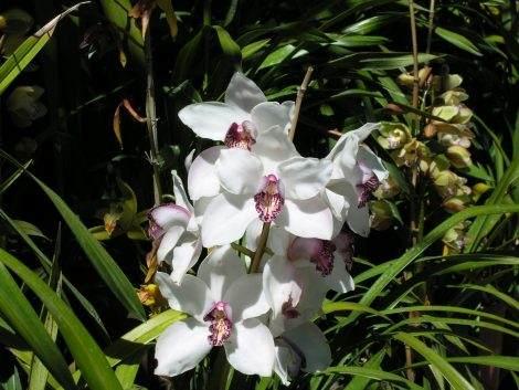 Madeira - die Blumeninsel