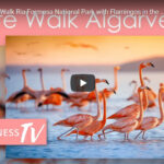 Algarve Flamingo